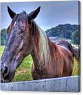 Black Horse At A Fence Canvas Print