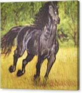 Black Horse Canvas Print