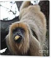 Black Howler Monkey  Canvas Print