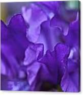 Black Iris Up Close Canvas Print