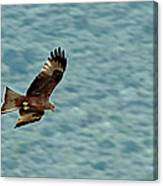 Black Kite Canvas Print
