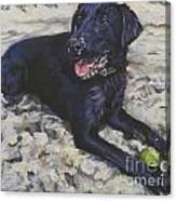 Black Lab On The Beach Canvas Print
