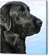 Black Labrador Retriever After The Swim Canvas Print