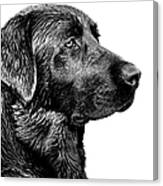 Black Labrador Retriever Dog Monochrome Canvas Print