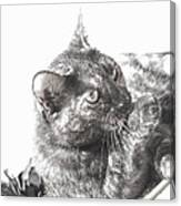 Black N White Cat Canvas Print