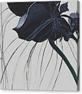 Black Orchid Canvas Print