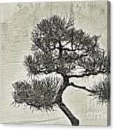 Black Pine Bonsai In Monochrome Canvas Print