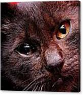 Black Puppy Cat Canvas Print