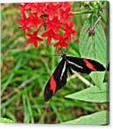 Black Red And White Butterfly Canvas Print
