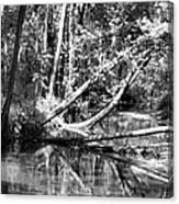 Black Reflected Canvas Print