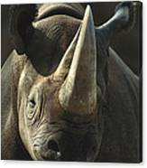 Black Rhinoceros Portrait Canvas Print