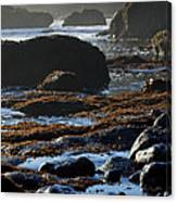 Black Rocks Lichen And Sea  Canvas Print