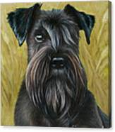 Black Schanuzer Canvas Print