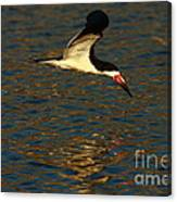Black Skimmer Reflections Canvas Print