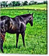 Black Stallion In Pasture Canvas Print