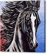 Black Stallion Canvas Print