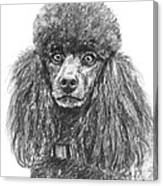 Black Standard Poodle Sketched In Charcoal Canvas Print