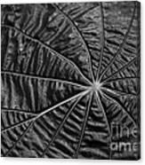 Black Star.. Canvas Print