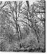 Black Stream Canvas Print