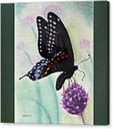 Black Swallowtail Butterfly By George Wood Canvas Print