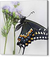 Black Swallowtail II Canvas Print