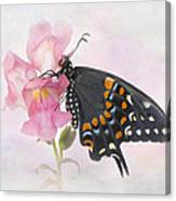 Black Swallowtail Iv Canvas Print
