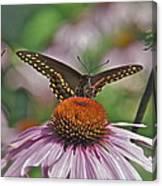 Black Swallowtail On Cone Flower Canvas Print