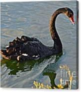 Black Swan At Sunset Canvas Print