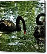 Black Swan Ballet Canvas Print