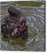 Black Swan Gladys Porter Zoo Texas Canvas Print