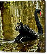 Black Swan Lake Canvas Print