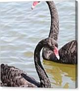 Black Swan Pair Canvas Print
