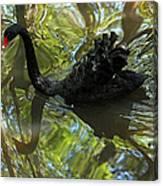 Black Swan Series V  Canvas Print