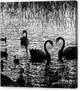 Black Swan Silhouette Canvas Print