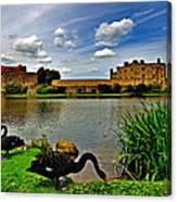 Black Swans At Leeds Castle II Canvas Print