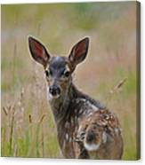 Black Tailed Fawn Canvas Print