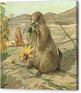 Black-tailed Prairie Dogs Canvas Print