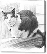 Black White Cat Pencil Portrait Canvas Print