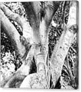 Black White Tree Large Trunk Nature Sculpture Fall Fine Art Photography Deco Canvas Print