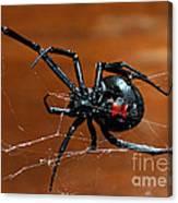 Black Widow Spider Canvas Print
