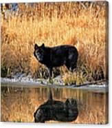 Black Wolf Reflection Canvas Print