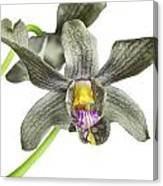 Black Yellow And Purple Orchid Canvas Print