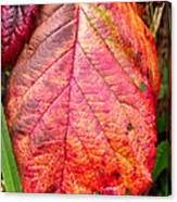 Blackberry Leaf In The Fall 3 Canvas Print