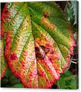 Blackberry Leaf In The Fall 4 Canvas Print