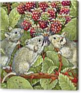 Blackberrying Canvas Print