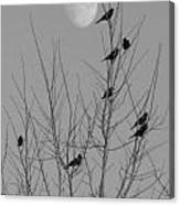 Blackbirds By The Moon Canvas Print