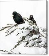 Blackbirds In Snow Canvas Print