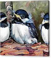 Blackcapped Chickadee Babies Canvas Print