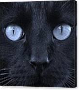 Blackie Blue Canvas Print