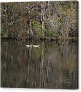 Blackwater Reflections Canvas Print